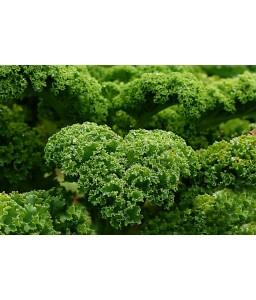 Λαχανίδα Kale