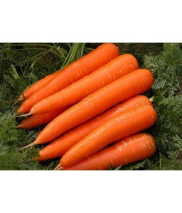 Καρότο Nantes 2 Seminis 25 gr