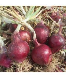 Κρεμμύδι Red 355 Ortis 500gr (χειμωνιάτικο)