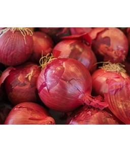 Κρεμμύδι Red Morada Ortis/Vilmorin (ανοιξιάτικο) LN0000AC347