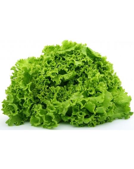 Μαρούλι κατσαρό πράσινο Atena(astra) 100gr
